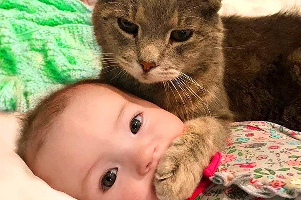 مذاکره عجیب یک کودک با گربه!+فیلم دیدنی