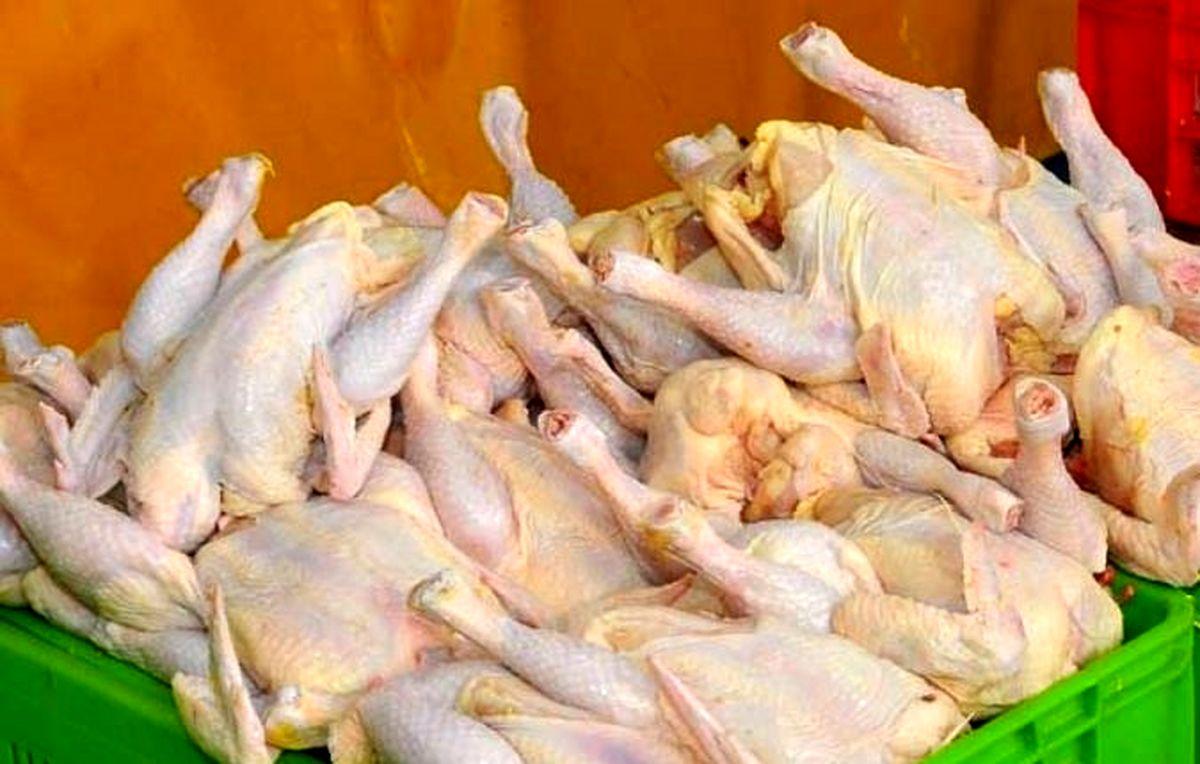 خبر خوش قیمت مرغ کاهشی شد/ خداحافظی با کمبود مرغ