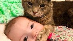 واکنش عجیب گربه به ابراز محبت یک کودک+فیلم داغ