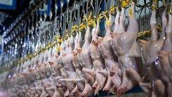 ارزانی قیمت مرغ در راه است؟
