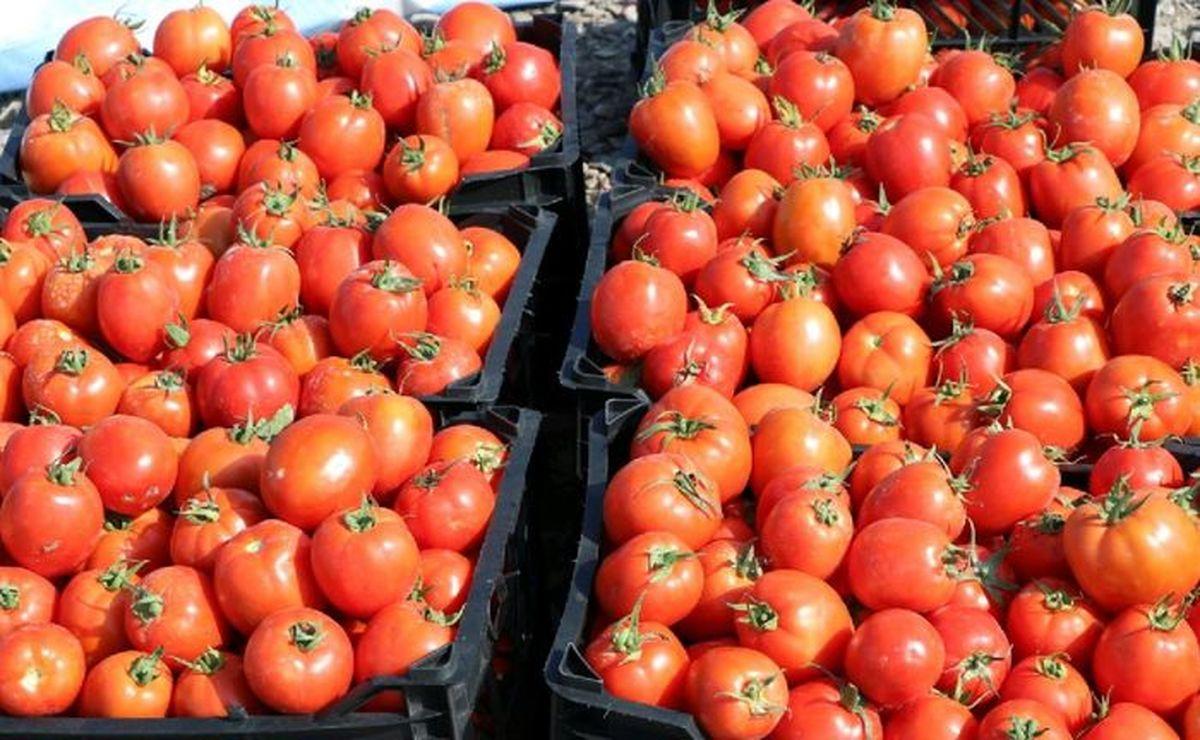 علت گرانی گوجه فرنگی مشخص شد/ گوجه فرنگی هم نایاب شد!